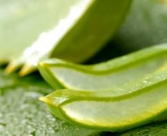 Gel di Aloe Vera: efficace elisir di salute